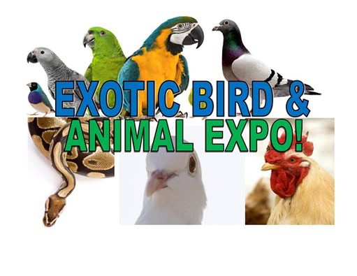 SACRAMENTO EXOTIC BIRDS EXPO