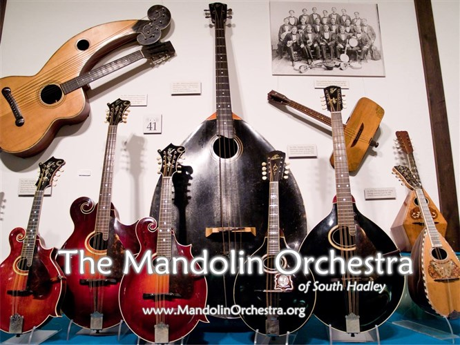 The Mandolin Orchestra